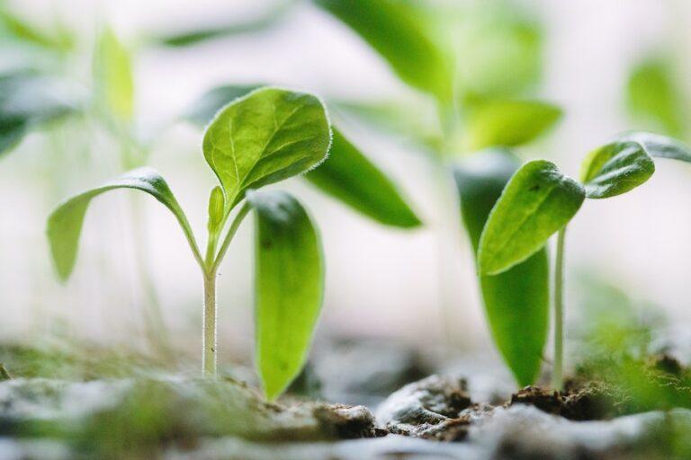 fresh start sprout